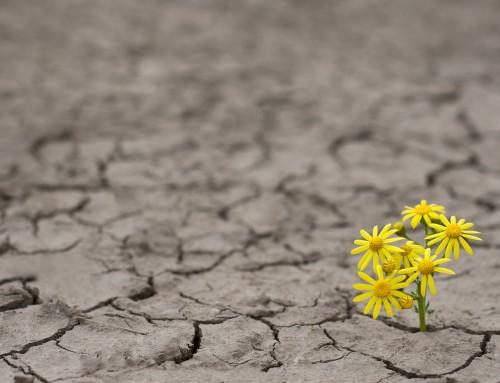 Top Ten Secrets to Building Resilience