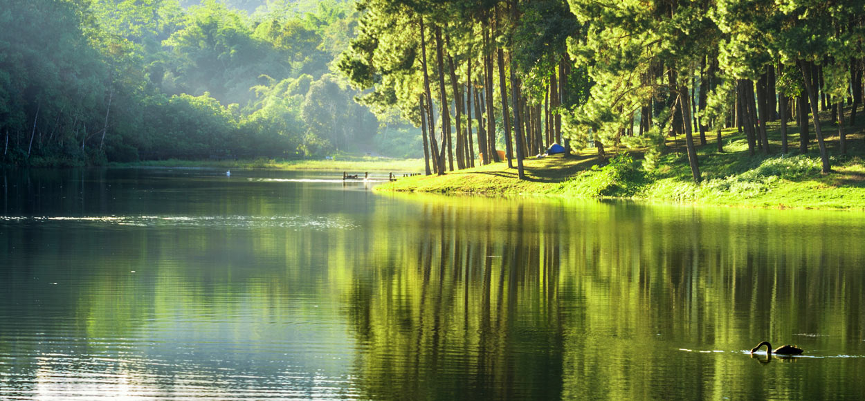 Photo of peaceful river with trees and swan